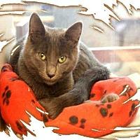 Adopt A Pet :: DJ (& Morris) - Arlington, VA