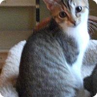 Adopt A Pet :: Trisha - Colmar, PA