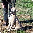 Adopt A Pet :: Silverne