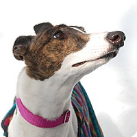 Adopt A Pet :: Gorgeous - Ware, MA