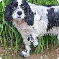 Adopt A Pet :: Wynona - Alpharetta, GA