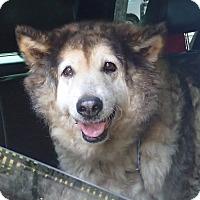 Adopt A Pet :: Amy - Ravenel, SC
