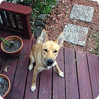 Adopt A Pet :: Riley (fostered in TX) - Cranston, RI