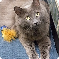 Adopt A Pet :: Smokey - Chicago, IL