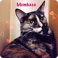 Adopt A Pet :: Mombasa - Foothill Ranch, CA