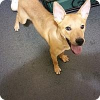 Adopt A Pet :: Timber (located in TX) - Cranston, RI