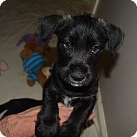 Adopt A Pet :: Landon - Memphis, TN