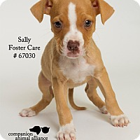 Adopt A Pet :: Sally (Foster) - Baton Rouge, LA