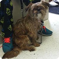 Adopt A Pet :: Rambo - LEXINGTON, KY