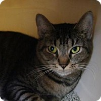 Adopt A Pet :: Aretha - New Milford, CT