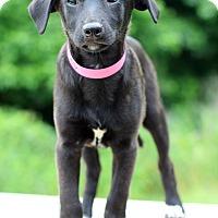 Adopt A Pet :: Aries - Waldorf, MD
