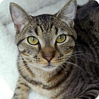 Adopt A Pet :: Zig Zag - Bradenton, FL