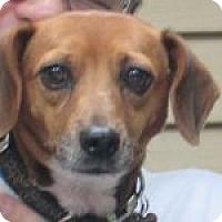 Adopt A Pet :: Daisy - Dumfries, VA