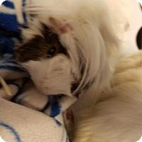 Adopt A Pet :: Brett - Kenosha, WI