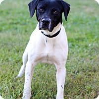 Adopt A Pet :: Walker - Waldorf, MD
