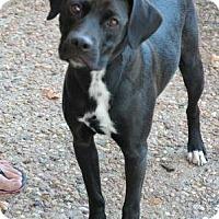 Adopt A Pet :: Mack - Manhattan, KS