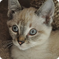 Adopt A Pet :: Jones - La Canada Flintridge, CA