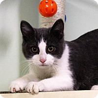 Adopt A Pet :: stylus - Murphysboro, IL