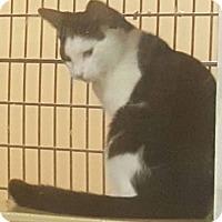 Adopt A Pet :: Reagan - Griffin, GA