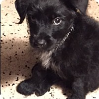 Adopt A Pet :: OPAL - Fort Lauderdale, FL
