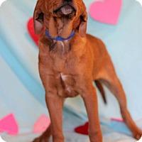 Adopt A Pet :: Yale - Waldorf, MD