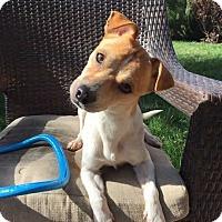 Adopt A Pet :: Yogi - Livermore, CA