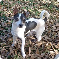 Adopt A Pet :: Max - hartford, CT