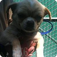 Adopt A Pet :: Candy - Anaheim, CA