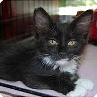 Adopt A Pet :: Jewels - Modesto, CA