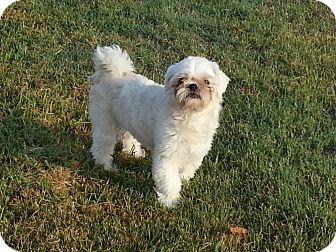 Small Dog Adoption San Antonio Tx