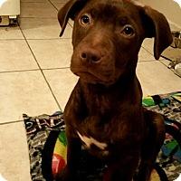 Adopt A Pet :: Mary Jane - Woodbridge, CT