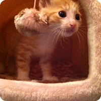 Adopt A Pet :: Baby1 - Trevose, PA