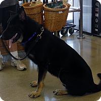 Adopt A Pet :: THORAN - SAN ANTONIO, TX
