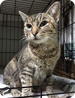 Cat Rescue Manchester Nh