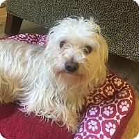 Adopt A Pet :: Curly - San Francisco, CA