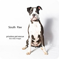 Adopt A Pet :: South Paw - in Foster Care - Chino Hills, CA