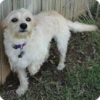 Adopt A Pet :: Patrick - Bedford, TX