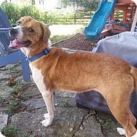 Adopt A Pet :: Julie - Columbus, OH