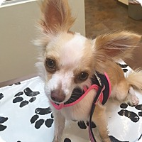 Adopt A Pet :: ROSEE - BROOKSVILLE, FL