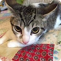 Adopt A Pet :: Nod - Putnam, CT