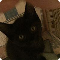 Adopt A Pet :: Eightball - Toronto, ON