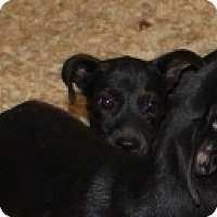 Adopt A Pet :: Legs - Harmony, Glocester, RI
