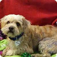Adopt A Pet :: Oliver - Vacaville, CA