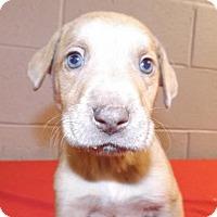 Adopt A Pet :: Porky - Oxford, MS
