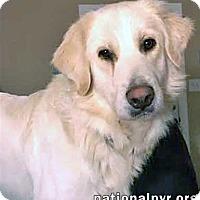 Adopt A Pet :: Angel in TN - new! - Beacon, NY