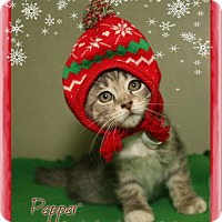Adopt A Pet :: Pepper - Shippenville, PA