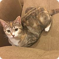 Adopt A Pet :: Summer - Horsham, PA