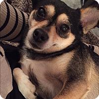 Adopt A Pet :: Tanzi - Edmonton, AB