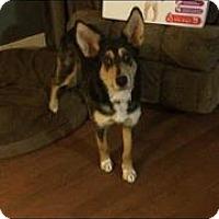 Adopt A Pet :: Thea - Edmonton, AB