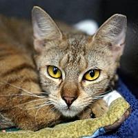 Adopt A Pet :: Persephone - Tucson, AZ